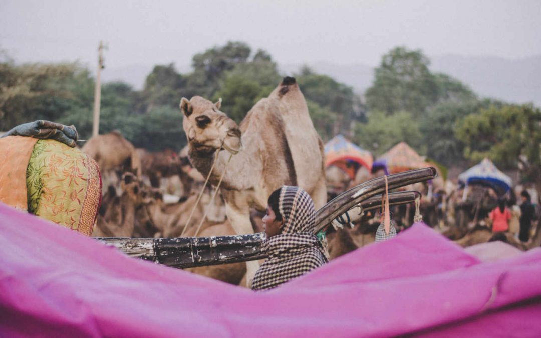 Culture, Religion and Luxury at The Pushkar Camel Fair