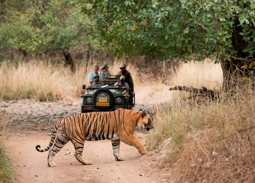 Ranthambhore National Park with Sherbagh